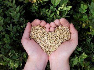 cuore di cereali fatto con le mani